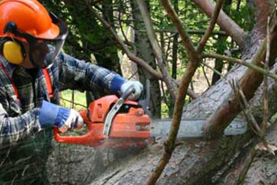 图片 Logging & Chainsaw Safety